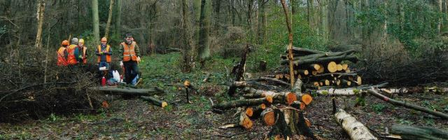 HEAD Winter coppicing.jpg